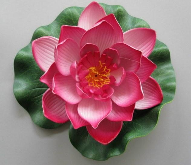 Schwimmende Seerose rosa